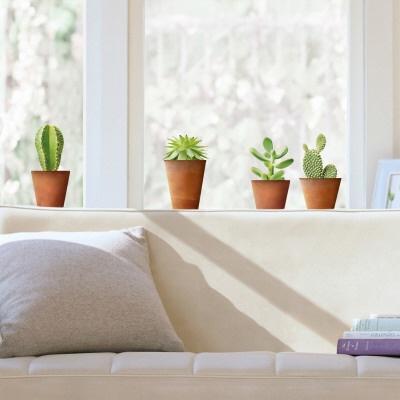 Detail Deco Cactus Maison L Fwonuu